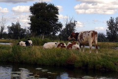 Holland-2013-39