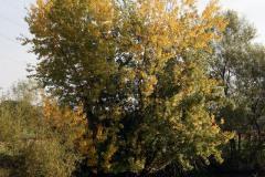 Herbstangeln-2013-15